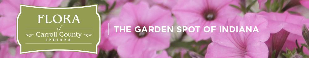 flora-header-flowers-garden-spot
